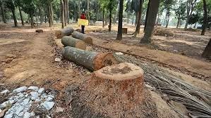 সোহরাওয়ার্দীতে আপাতত গাছ কাটা যাবে না: হাইকোর্ট
