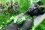 কুয়েতে করোনায় মোট ২৩৬ প্রবাসী বাংলাদেশির মৃত্যু