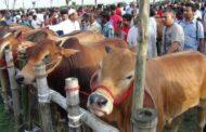 পশুর হাটে কেনা-বেচা চলবে: ১৫ জুলাই-২৩ জুলাই পর্যন্ত