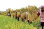 চিকিৎসক-ম্যাজিস্ট্রেট বিতণ্ডা: বিচার বিভাগীয় তদন্ত চেয়ে রিট